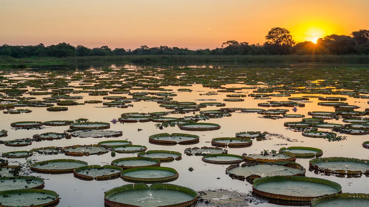 El Pantanal de Brasil