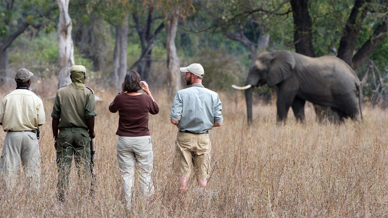 Observación de elefantes
