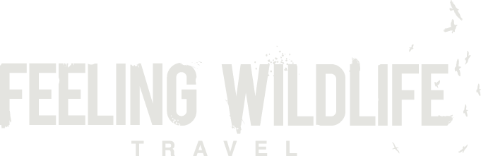 Feeling WildLife Travel