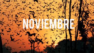 Viajar en Noviembre