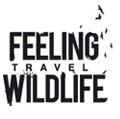 Feeling Wildlife Travel